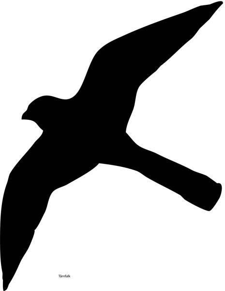 Fugl Tårnfalk. Skåret i skilte folie